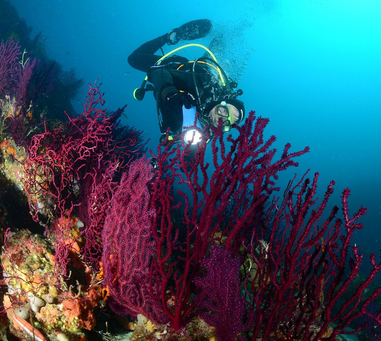 Scuba Diving, diving course, open water, diver course, night diving, Biograd, Croatia